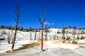 Landscape View Of Angel Terrace In Yellowstone Np