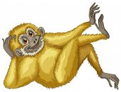 Illustration of a closeup gibbon