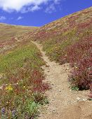 Alpine tundra in fall colors