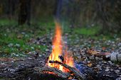 Camp fire in autumn forest