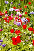 sping garden