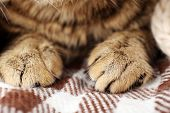 Grey cat's paws on blanket closeup