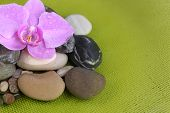Composition with orchid flower and stones in water on green background