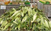 Fresh Corn and Vegetables