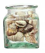 Seashells In Bottle