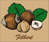 picture of pecan tree  - nut filbert - JPG