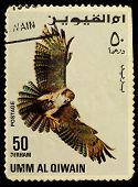 Umm Al-quwain  - Circa 1968: Postage Stamp Printed In Umm Al-quwain Showing A Bird Of Prey - Falcon,