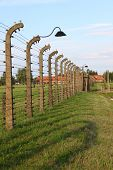 picture of auschwitz  - Barbed wire electrical fence at Auschwitz Birkenau - JPG
