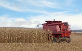 foto of combine  - Red combine harvesting corn in a farm field - JPG