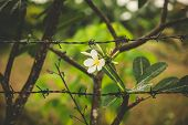 Flower And Barb Wire