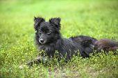 Vagrant Dog