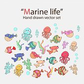 Vector marine life hand drawn set