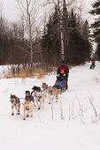 Beargrease 2015 Mid Distance Tony Mai On Trail
