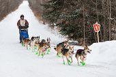 Beargrease 2015 Marathon Denis Tremblay On Trail