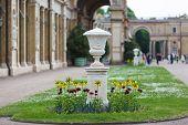 Flowerbed In Sanssouci
