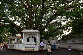 a small statue of Vishnu in the Vishnu temple of Devinuwara