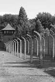 pic of deportation  - Barbed wire electrical fence at Auschwitz concentration camp, Poland