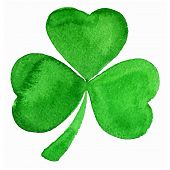 picture of clover  - Vector green watercolor clover on white background - JPG