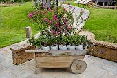 Wheelbarrow Full Of Colorful Flowers