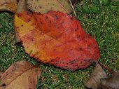 stock photo of bohemia  - colorful autumn leaves southern Bohemia Czech Republic - JPG