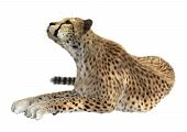 stock photo of cheetah  - 3D digital render of a big cat cheetah isolated on white background - JPG