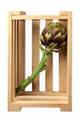 pic of wooden crate  - Artichoke in Wooden Crate on Isolated White Background - JPG