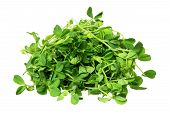 stock photo of snow peas  - Snow Pea Sprouts on Isolated White Background - JPG