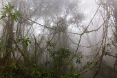 image of jungle  - Foggy jungle in the Chiang dao mounts - JPG