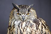 stock photo of stare  - Closeup picture of stare - JPG