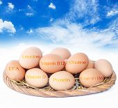 picture of b12  - The nutrients in eggs for weight control - JPG