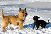 Two Dogs In Snow