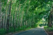 stock photo of row trees  - Road Between Row of expired para rubber tree and palm tree - JPG