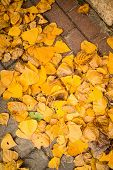 picture of cobblestone  - Autumn leaves scattered on a cobblestone street - JPG