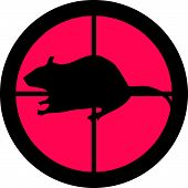 In the Scope Series - Rat