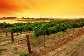 Green Vines Sunrise