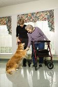 Elderly Caucasian woman using walker and middle-aged daugher petting dog in hallway of retirement co