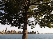 Tree with Lake Michigan and Chicago skyline in background.