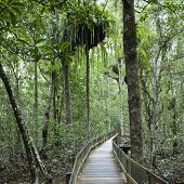 Wooden walkway in Daintree Rainforest, Australia.