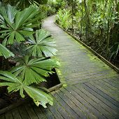 Wooden walkway through Daintree Rainforest, Australia.