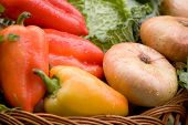 Harvest of the vegetables