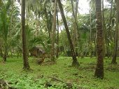 pic of mud-hut  - Mud hut in a coconut grove in Goa