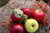 Apples On A Stump