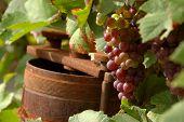 Rusty Winepress