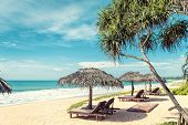 Beach Beds With Umbrellas On The Tropical Beach In Sri Lanka. Scenic View Of A Sand Beach. Beautiful poster