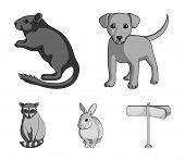 Puppy, Rodent, Rabbit And Other Animal Species.animals Set Collection Icons In Monochrome Style Vect poster