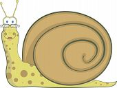 Bespectacled snail