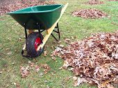 Wheelbarrow And Leaves