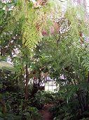 Melbourne Botanic Gardens Greenhouse