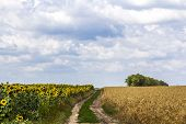 Landscape With Dirt Road Between Meadow Early In The Spring. Agriculture, Fields And Pastures. Natur poster