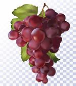 Fresh Red Grapes On Transparent Background. 3d Realistic Grapes.wine Red Grapes. Food Concept. Vecto poster